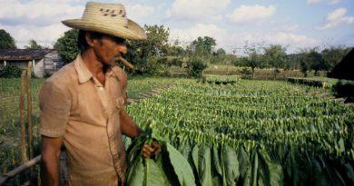 Абхазские депутаты требуют запретить перевод сельхоз земель в другие категории